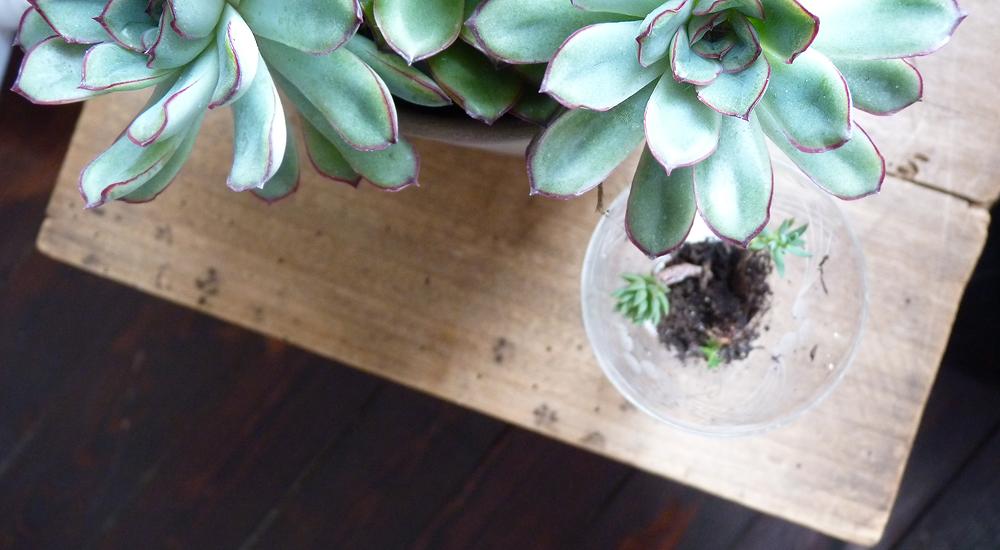 Succulentes_plantes_atelier_mulot_b