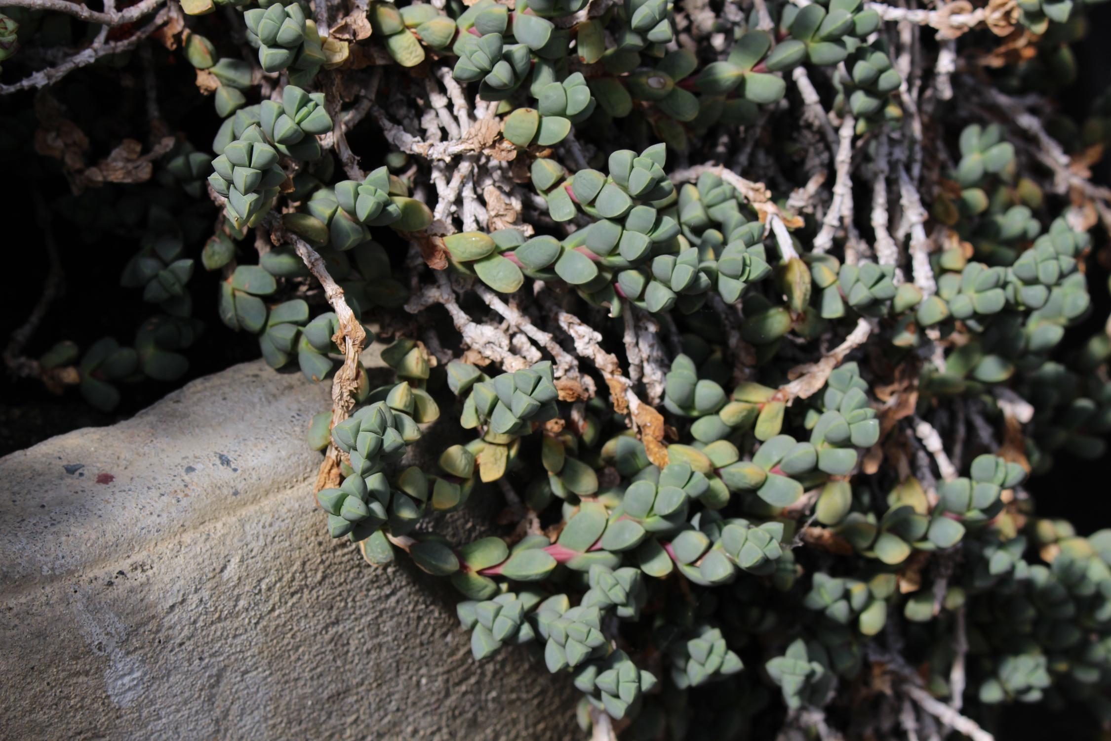 Succulentes_serres_2