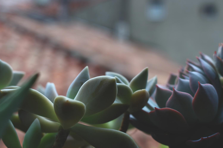 MulotB_Jardin_Succulente