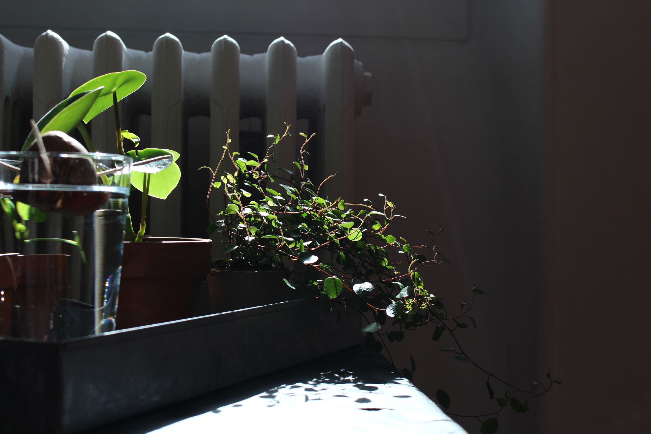 Plants_MulotB